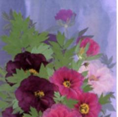 fleurs pressees.PNG