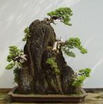 bonsai- a.jpg