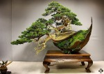 01-Juniper-bonsai-reyes.jpg