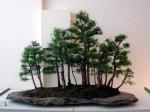 une-foret-de-bonsai-superbe.jpg